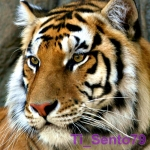 Ti_Sento79