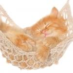 kitty29041985