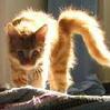 Solar_Cat