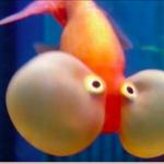 FloppyFish