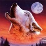 wolffang1307