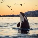 WhaleWatcher