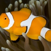 Fish88