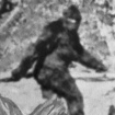 Bigfootisblurry