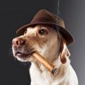 RauchenderHund