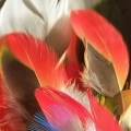 Lightowl