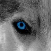 WolfBoy980