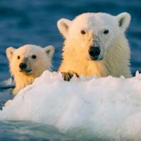 PolarBear96