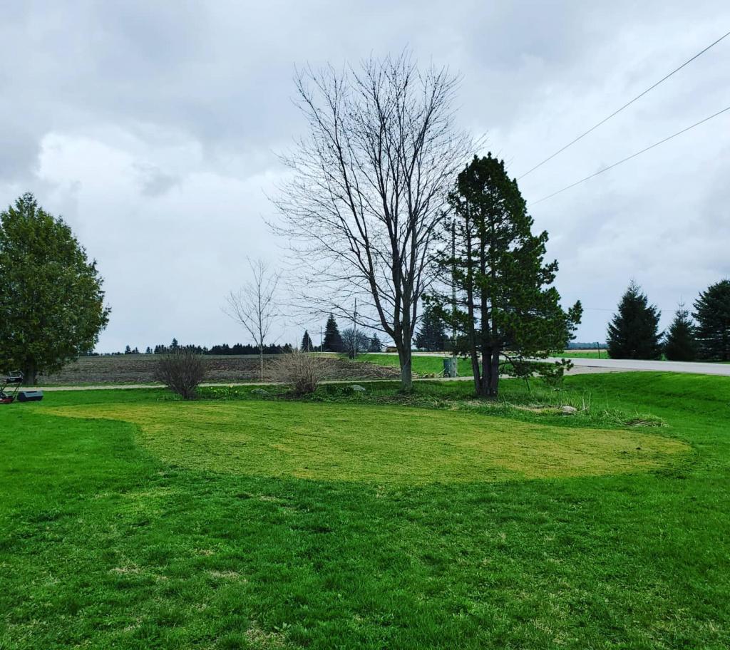 Green (yard view).jpg