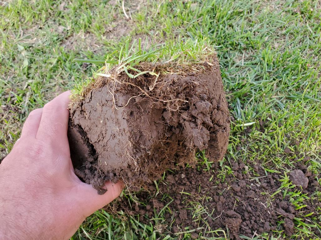Soil Plug.jpg