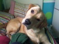 peacedog