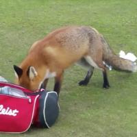 fox10078