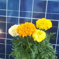 Solardoggy