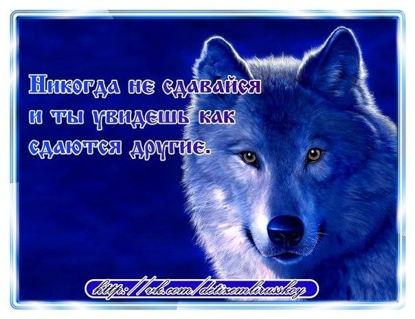 Цитаты в картинках про волков
