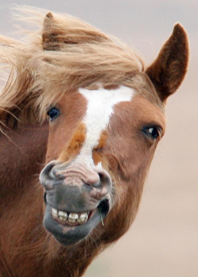 Зубы коня картинка