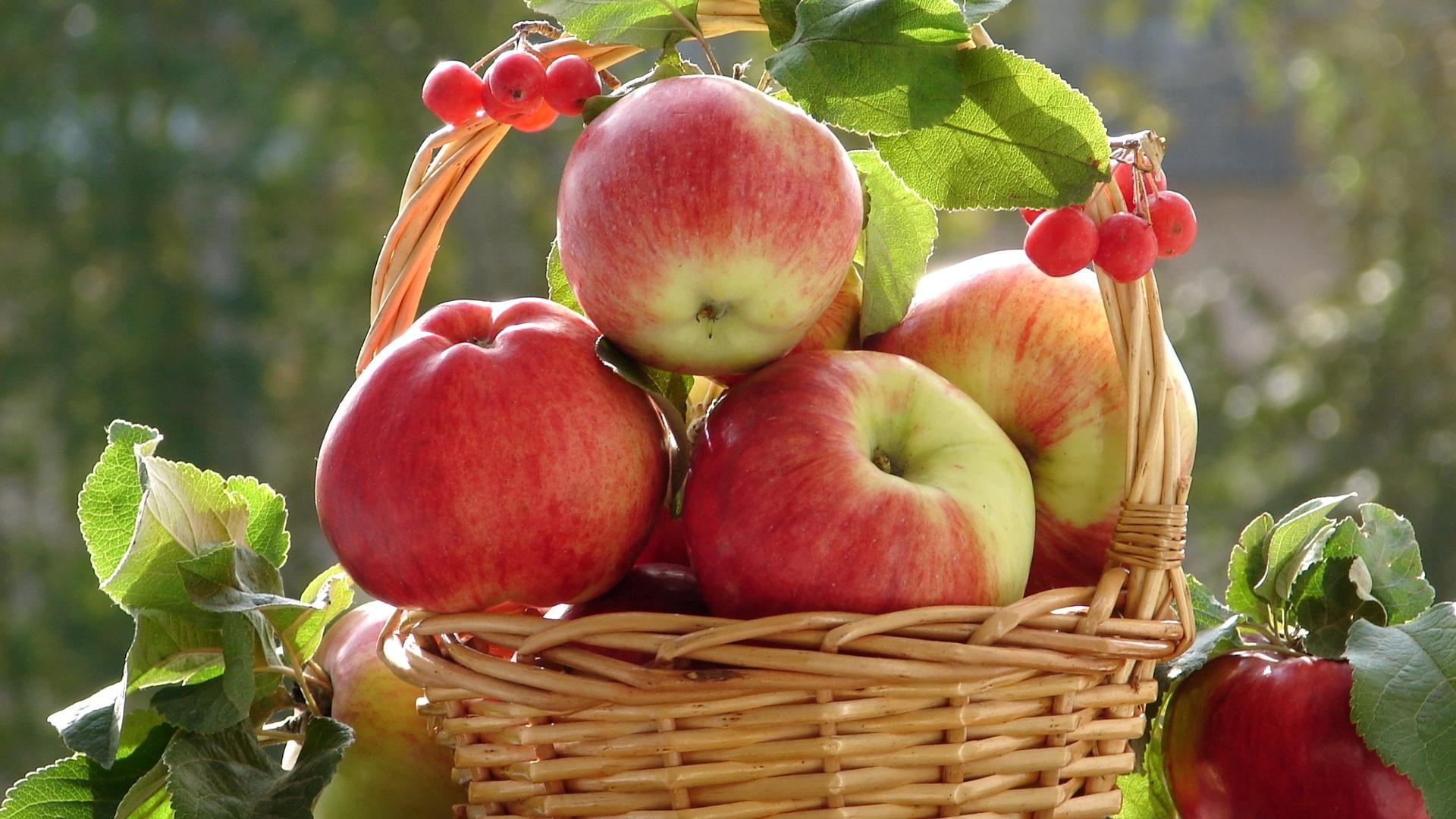 яблоки корзина очень листья смотреть