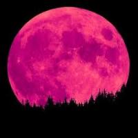 Pink Moon (DE1)