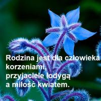 JadwigagadzinaL (PL1)