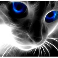 luckycat83 (DE1)