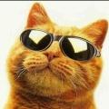 Cat220586Gamer (RU1)