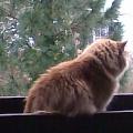 kitty24ch (DE1)