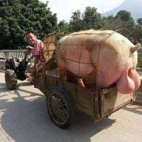 Boss_Hog (US1)