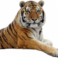 Tigerherzl (DE1)