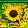 Chicaa (US1)