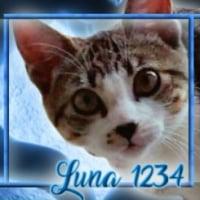 Luna1234 (ES1)