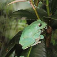 GreenDale (DE1)
