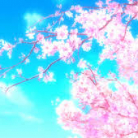 sakura さくら (US1)