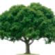 Tree Hugger2