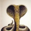 Legendary Kobra (CZ1)