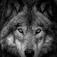 wolfson (HU2)