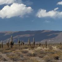 Cactus épineux (FR1)