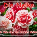 nelke09 (DE1)