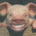 lachnet (DE1)