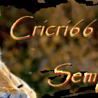 cricri66 (FR1)