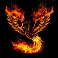 BM_Red Phoenix