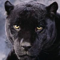 Le Roi noir (FR1)