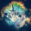 Galact1cat