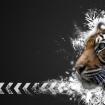 Tigerman55