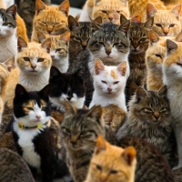about600cats
