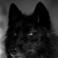 wolfepawzz
