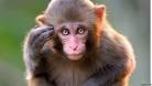monkeyonatree