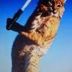 BobcatSkywalker