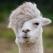 That_Llama