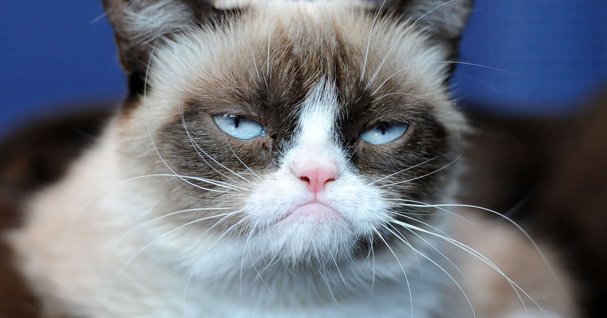 Picture of grumpy cat looking less than impressed