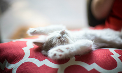 cat laid asleep with paws facing upwards