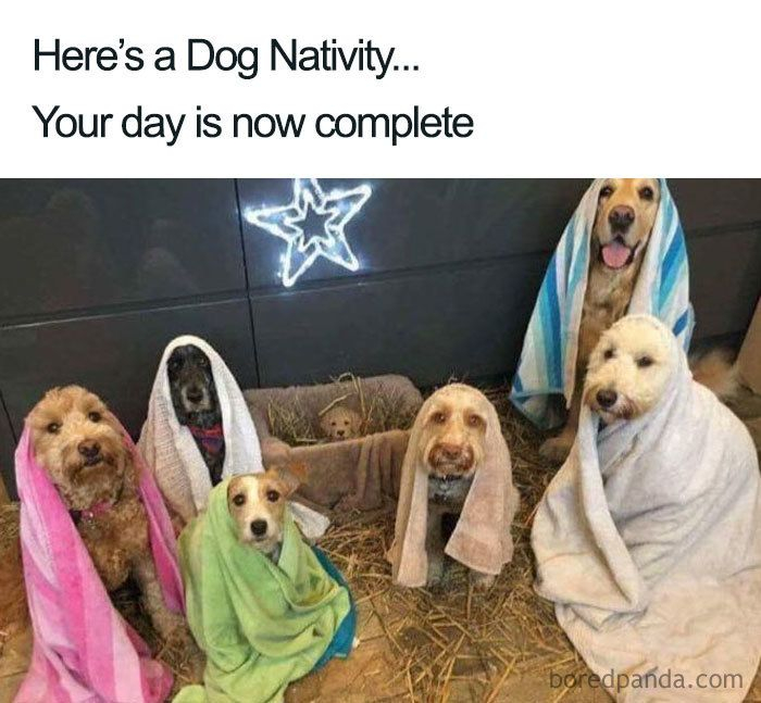 A group of 6 dogs each with towels on sat on hay like a nativity scene